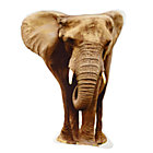 Kid_Jungle_Pillow_Elephant_180084_LL