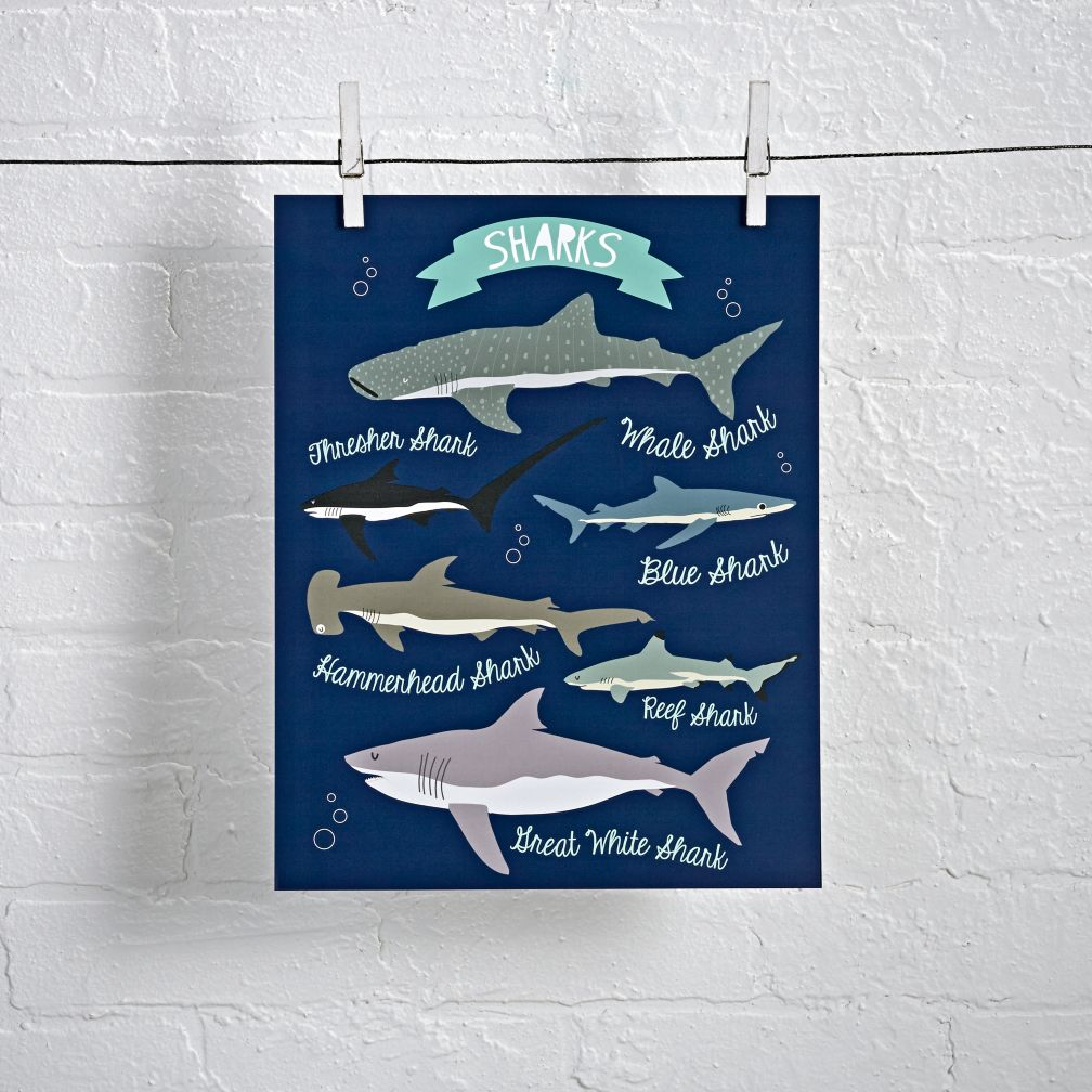 Shark Wall Art i love sharks wall art | the land of nod