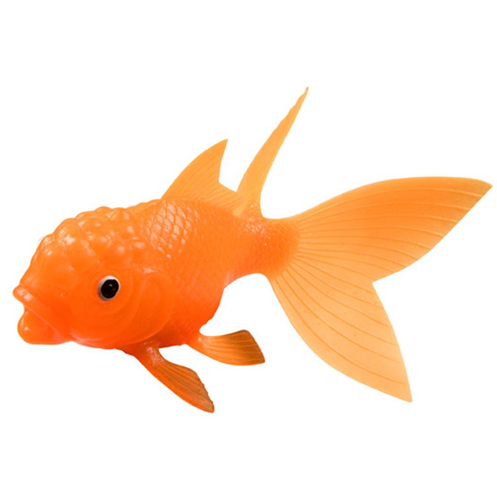 All That Glitters Goldfish The Land Of Nod